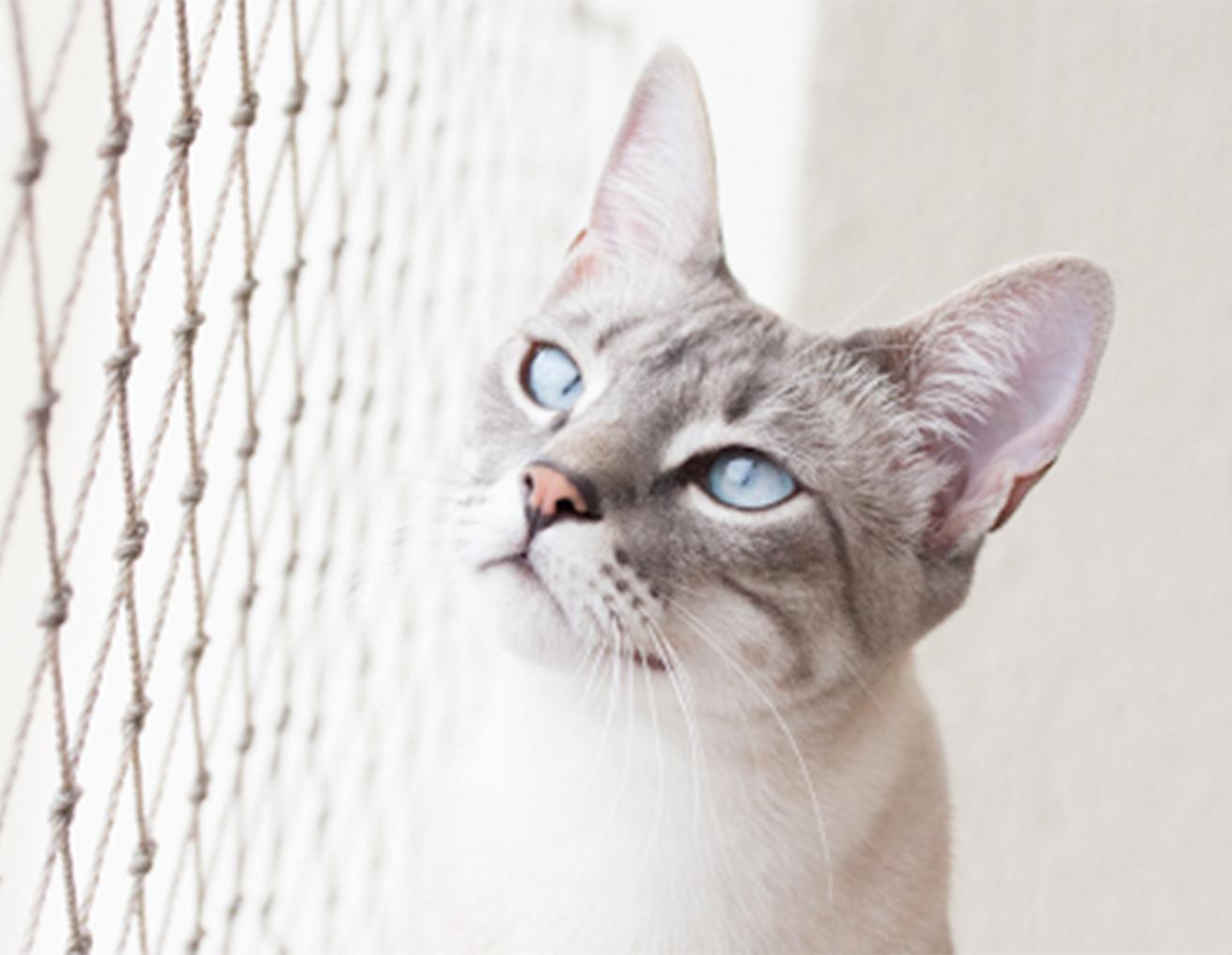 Rede de Proteção em SP para animais de estimação