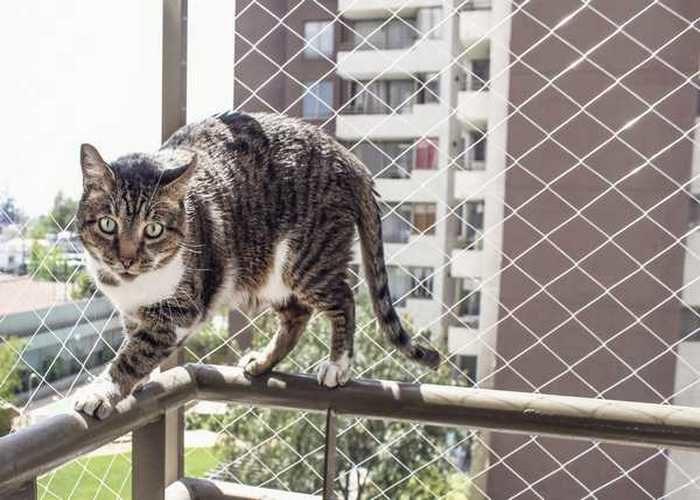 Rede de Proteção em SP para Gatos
