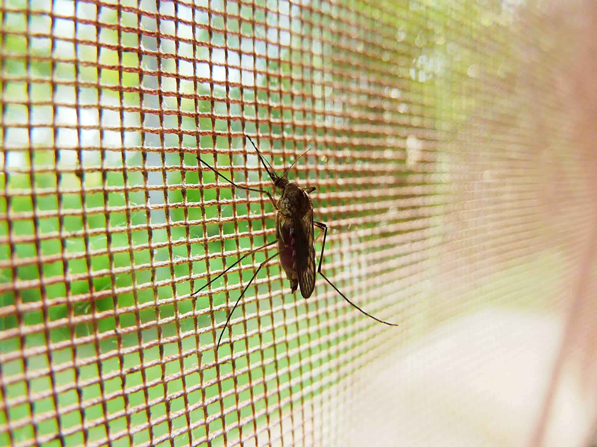 Instalação Tela Mosquiteiro em SP Prevenção contra insetos